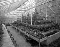 Greenhouse interior of the department